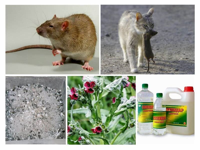 Народні засоби боротьби з мишами