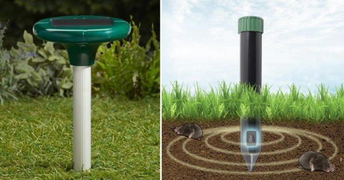 Як позбутися від землерийок: найефективніші способи боротьби з землерийки