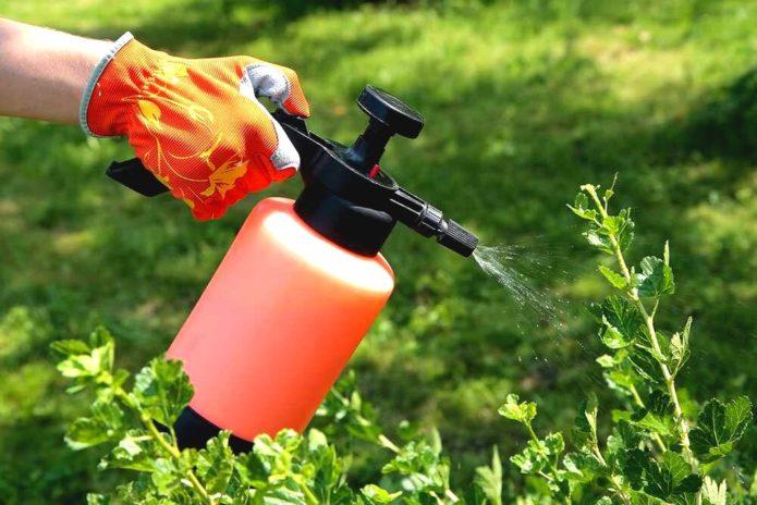 Народні та хімічні методи боротьби з попелиць